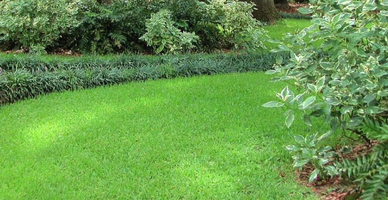 Best Feed And Weed For St Augustine Grass