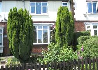 coniferous tree near house