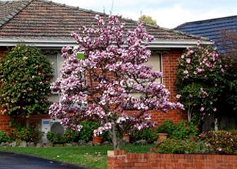 ornamental tree near house