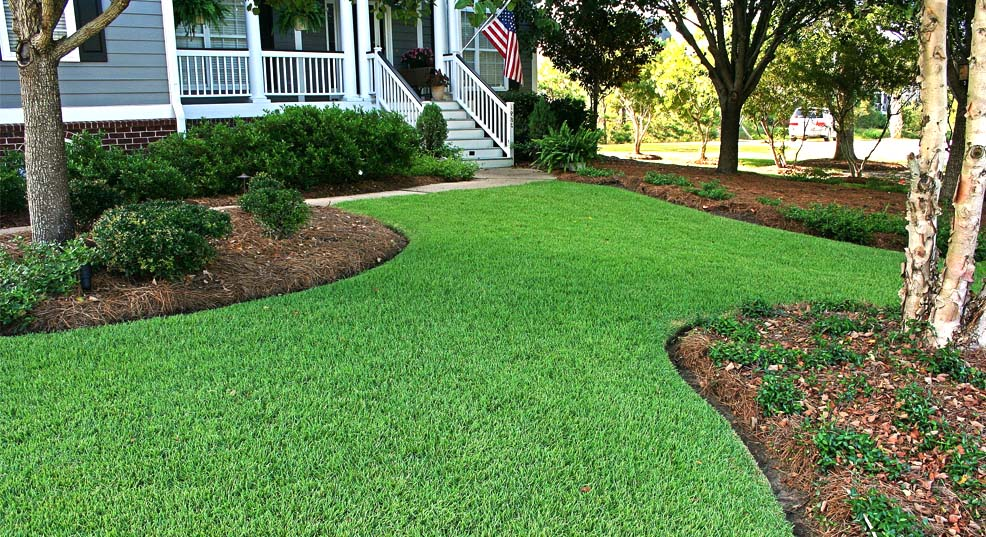 best grass for south carolina