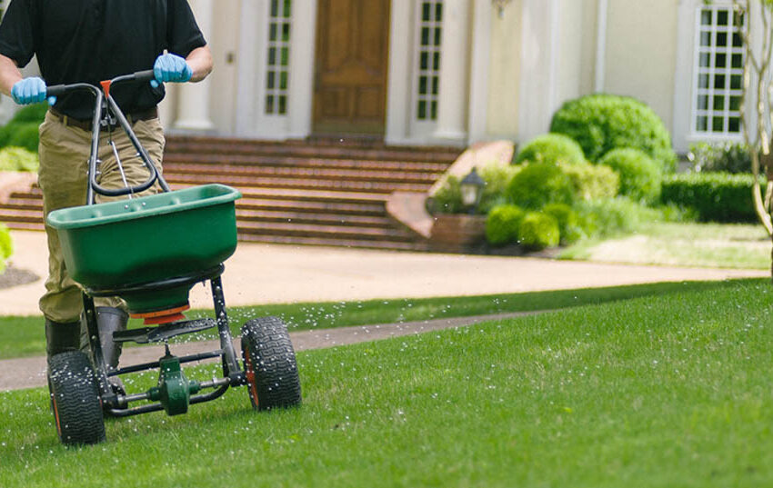 best weed and feed for southern lawns in 2020