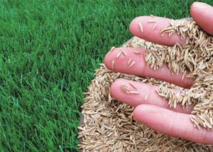 cool season grass for south carolina