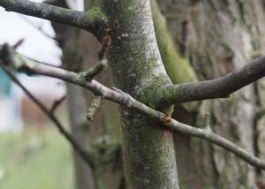 flexible-tree-branch