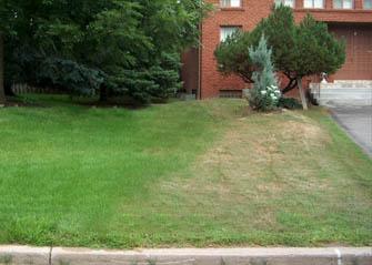 unhealthy lawn