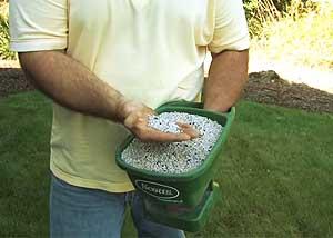 bermuda grass fertilizer