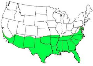 bermuda grass adaption in the US