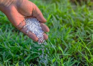 fertrilizing a lawn