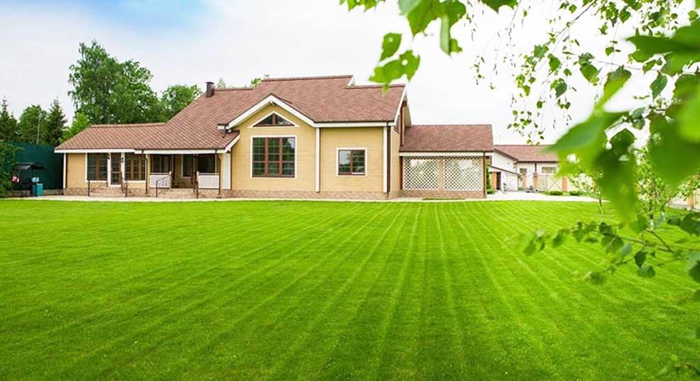 fescue vs bluegrass for lawn